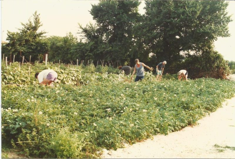 groententuin-familie-bajlo