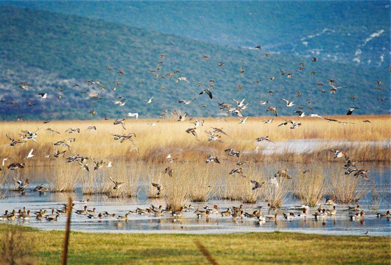 vogelreservaat