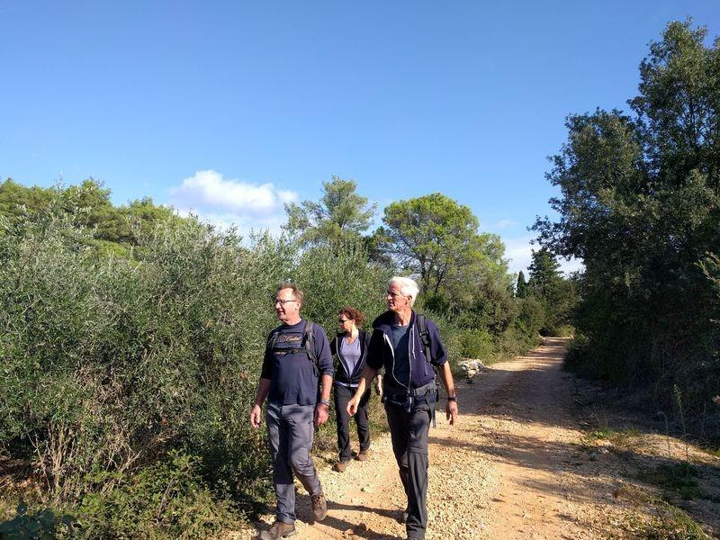 wandelpad op Ugljan tussen olijven