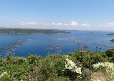 vislijnen Dugi Otok