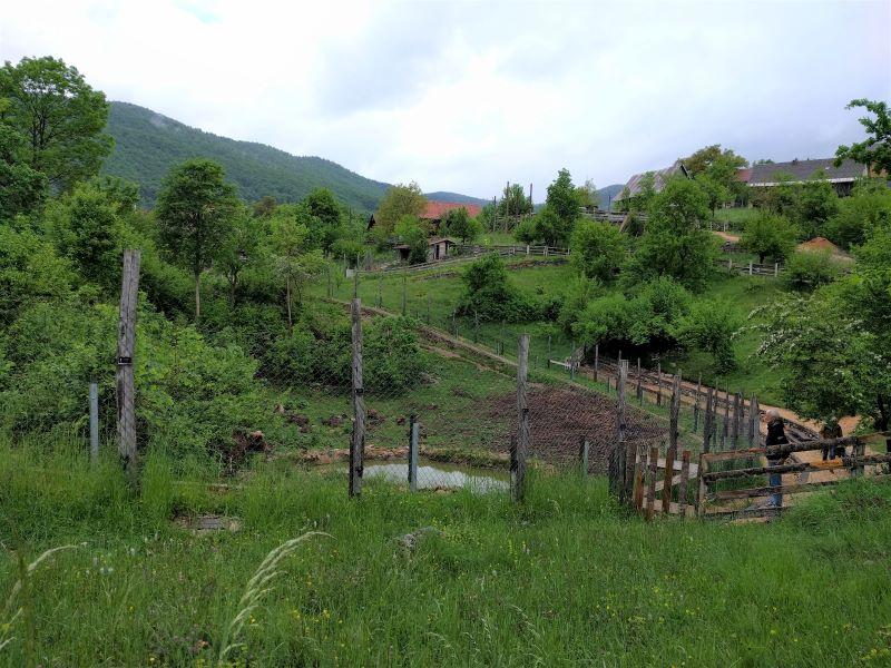 Kuterevo natuurgebied met beren