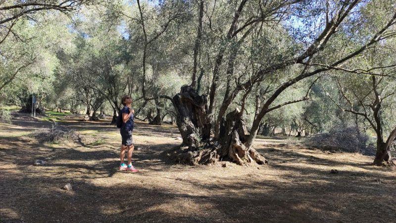 Lastovo olijfgaard