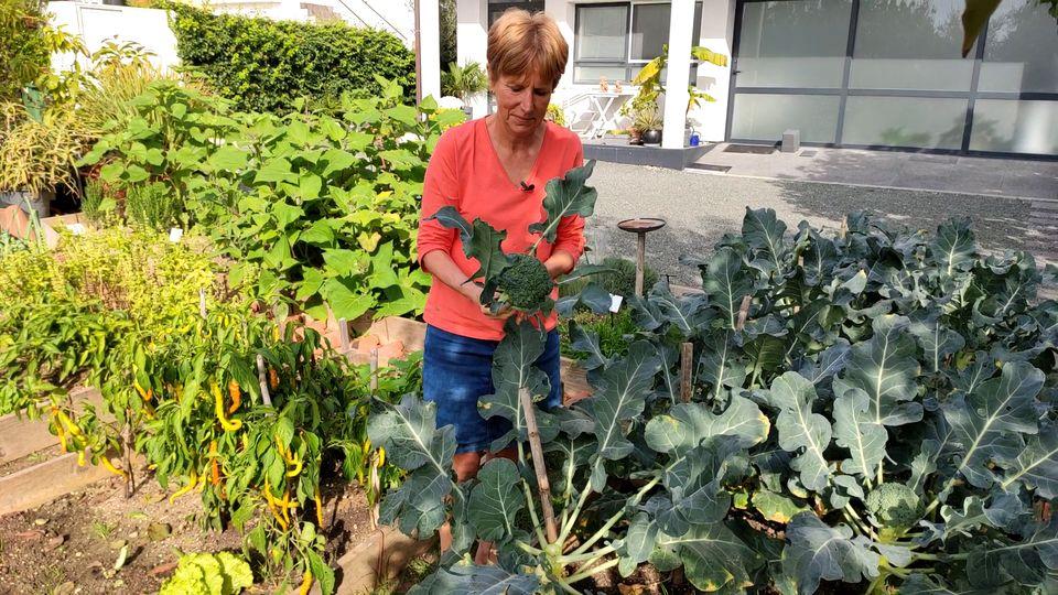 herfstgroenten broccoli
