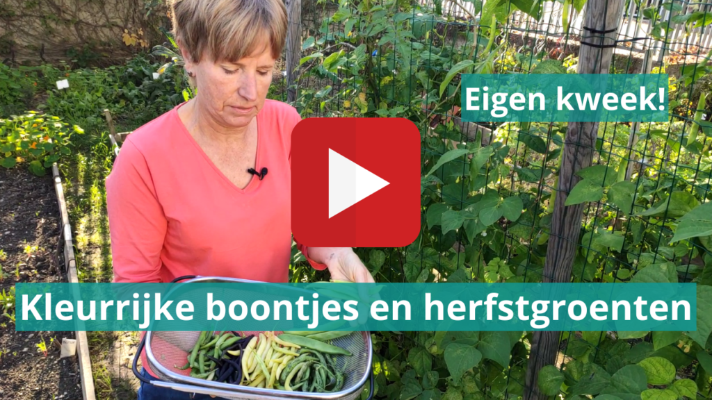 video herfstgroenten