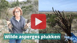 asperges plukken